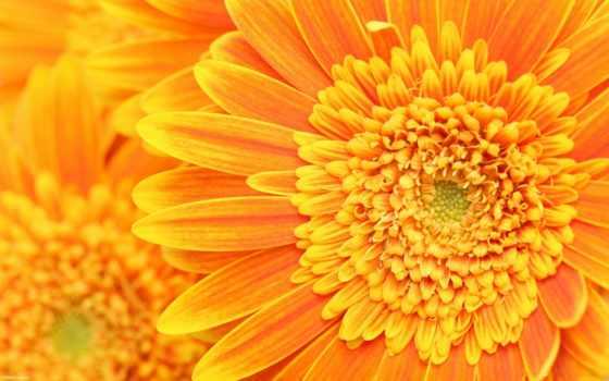 оранжевый, цветы, лепестки Фон № 90174 разрешение 2560x1600