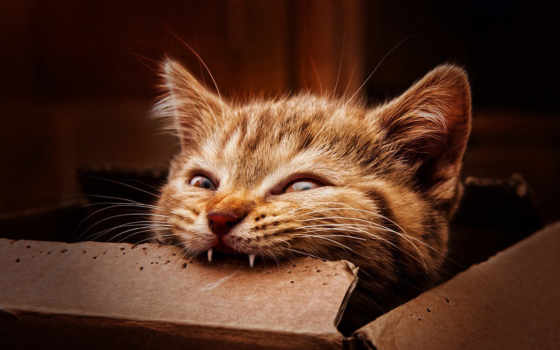 kot, зубы, котенок