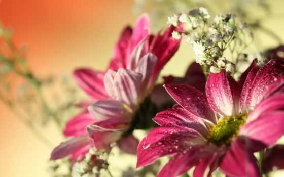 fond, fleurs, gouttes, ecran, eau, fonds, rouge, sur, pour,