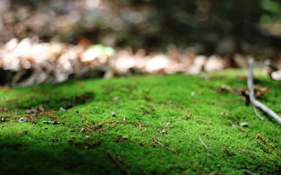 макро, природа, фв, ветки, дневник, lipa, зелёный, que, frases, liveinternet,