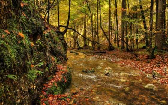 peaceful, пасть, осень, лес, images, ручей, музыка, falls,