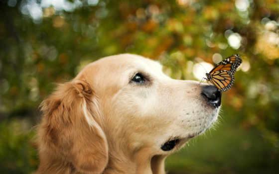 бабочка, собака