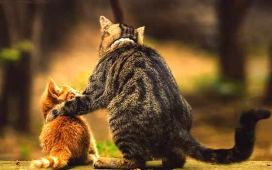 коты, почему, kot