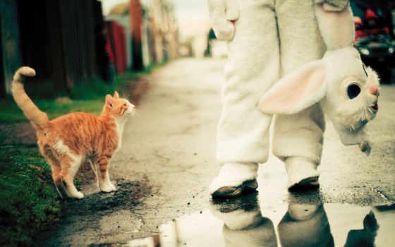 benoit, paille, many, cadillac, котейка, июнь, коты,