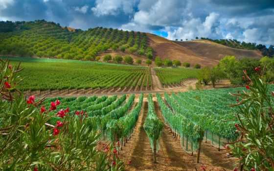 paso, viñedos, margin, california, robles, cerca, газоны, pantalla,