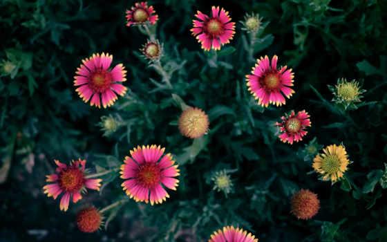 online, цветы, ноутбук, taustapildid, best, desktop, bunga, images, природы, цена,