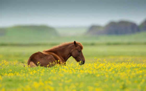 , лошадь, поле, цветы,