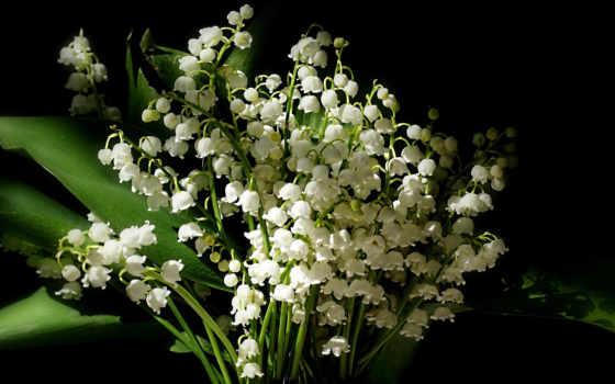 ландыши, цветов, zoom, долина, lilies,