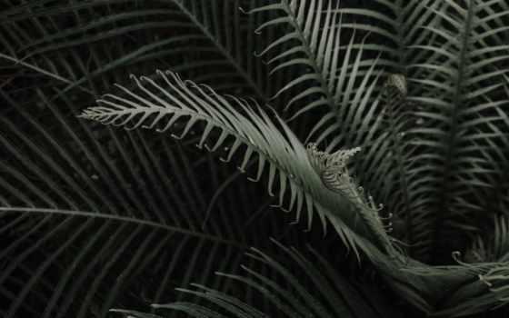 desktop, best, растение, free, high, телефон, папоротники,