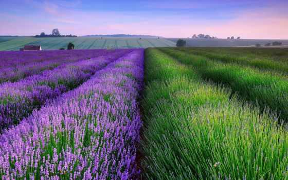 lavender, поля, поле, desktop,