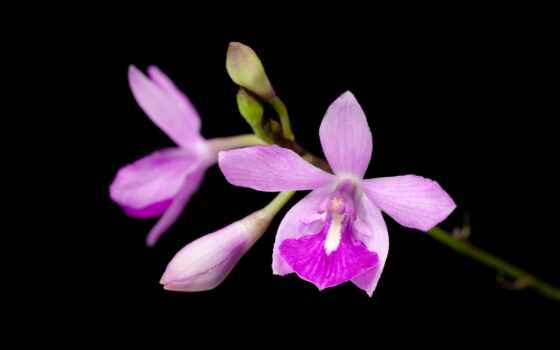 орхидея, christmas