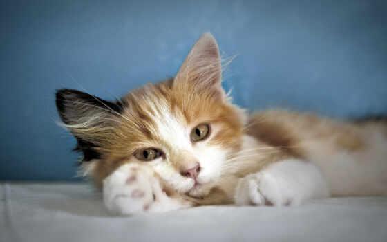 котенок, high, кот, spotted, white, black, love, кролик, alma, cute