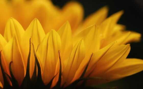del, alma, reflexionar, agosto, шар, hope, how, pensamiento