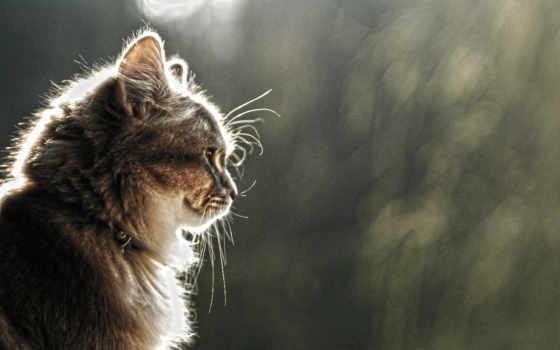 кот, взгляд