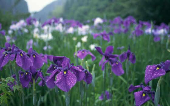 капли, фиолетовые