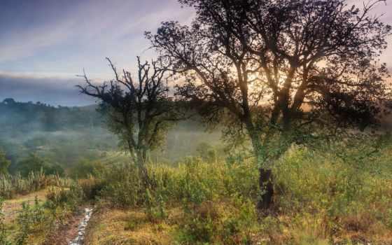 небо, утро, природа