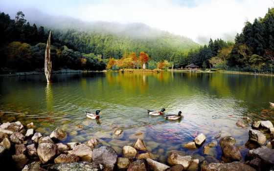 высокого, разрешения, vintika, landscape, автор, vintik, пейзажи -, интересное, zhivotnye, страница,