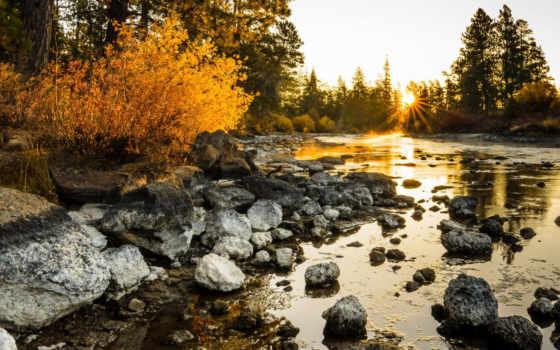 солнца, природы, красивые, красивыми, природа, закатами, вконтакте, rays, ворошить, птичий, лес,