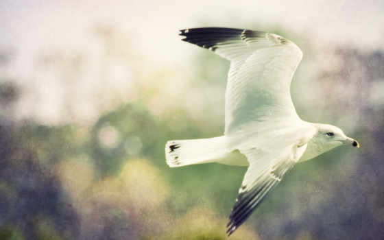 птица, чайка, mobile, телефон, smartphone, полет, категории, картинка, полете, art,