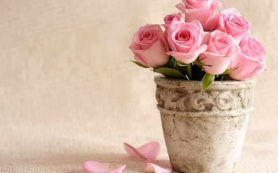 цветы, розы, розовый Фон № 56673 разрешение 4000x2995