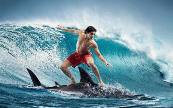 серфинг, парень, акуле, волна,