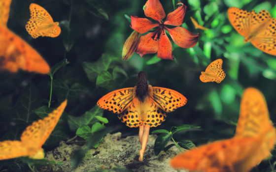 крылья, zhivotnye, бабочки