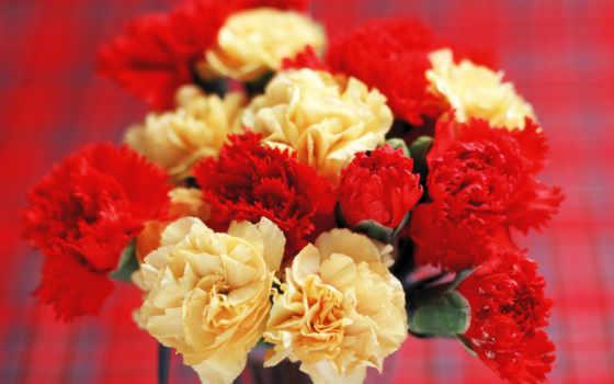 роза, картинку, букет, марта, шпилька, festive, гвоздики,