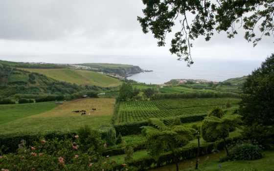 картинка, природа, португалия