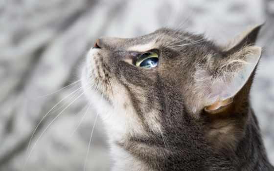 кот, profile, морда, взгляд, свет, watch, уши, wpapers,