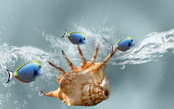 ,, синий, вода, рыба, ракушка,