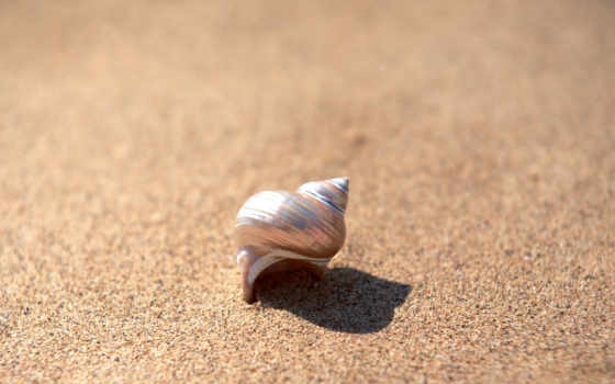ракушка, песок