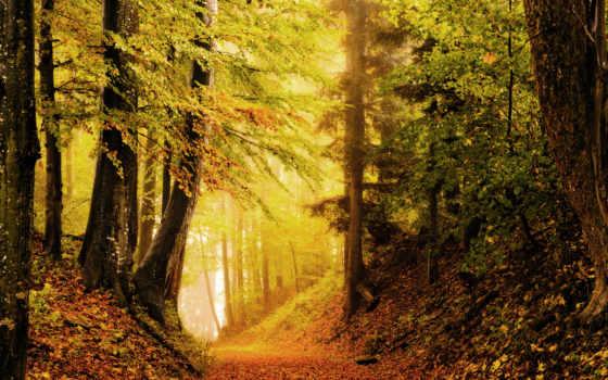 природа, осень