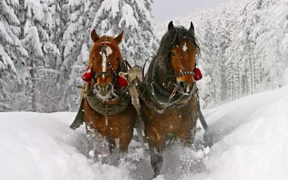 winter, снег, лошади, сани,