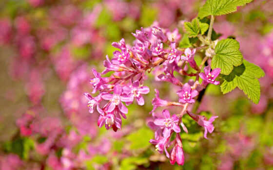 цветы, çiçek