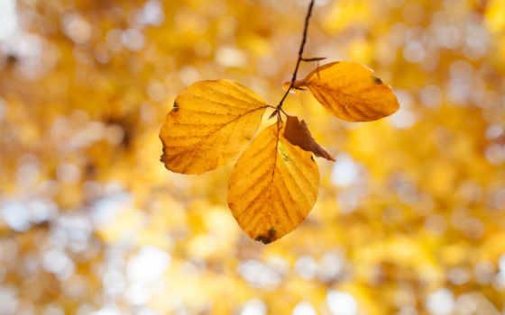 yenta, фото, осень