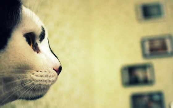 дек, profile, кот