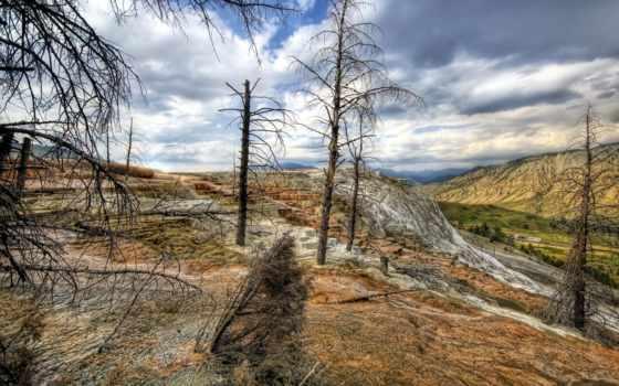 trees, сухие, природа, небо, парки, сша, ветки, oblaka, hdr, yellowstone,