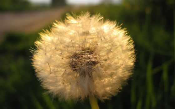 трава, fondos, цветы