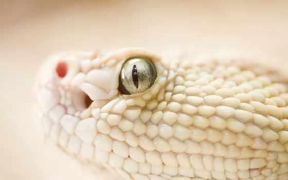 serpente, snake, ди