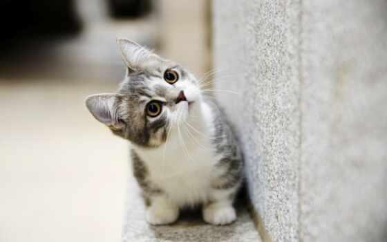 кот, cute, animal, котенок, funny, baby