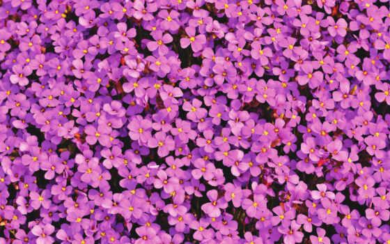 cvety, purple, color, лепесток, цветы, nail, jersey, балахон