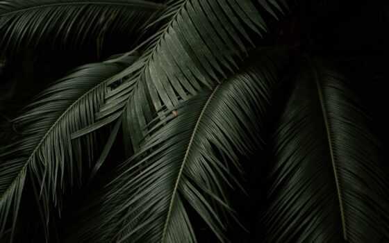 leaf, dark, wallpaprs, лист, palm, ipad, мини, mobile, зелёный, smartphone, tropical