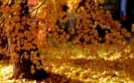 листья, природа Фон № 32400 разрешение 3000x2000