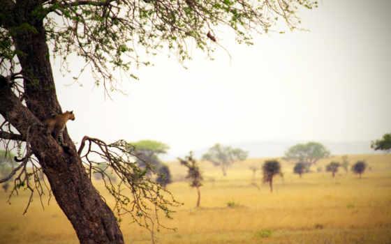 сафари, дерево, графика