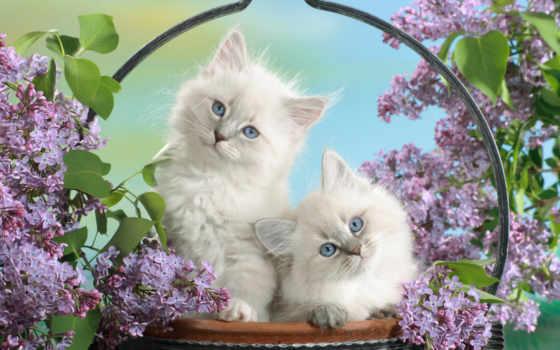 котята, кошки, пушистые
