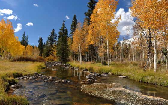 осень, река, trees, landscape, лес, природа, телефон, широкоформатные, телефоны, скачивайте,