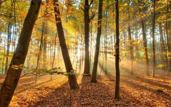 осень, лес, природа, trees, rays, солнца, свет, фоны,