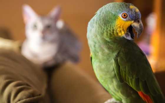 попугай, video, кот, кота, robot, допрашивает, попугая,