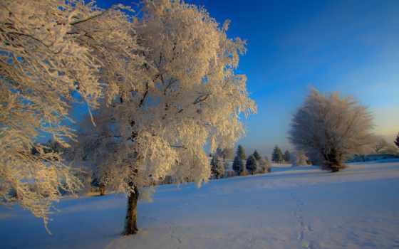 природа, снег, winter, дерево, зимняя, иний, trees, sony,