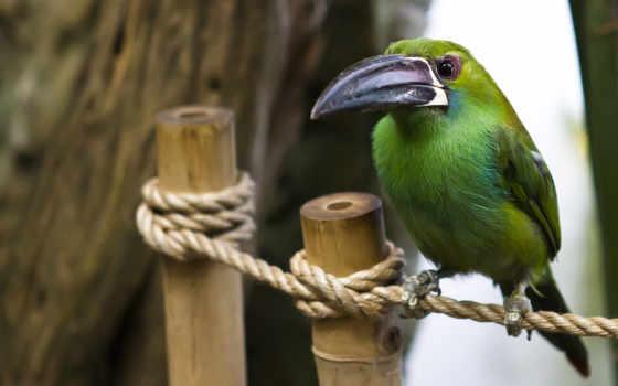 птица, большим, клювом